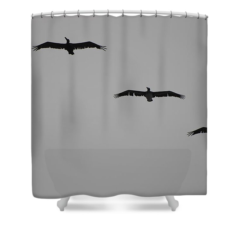 Black And White Shower Curtain featuring the photograph The Birds by Rob Hans