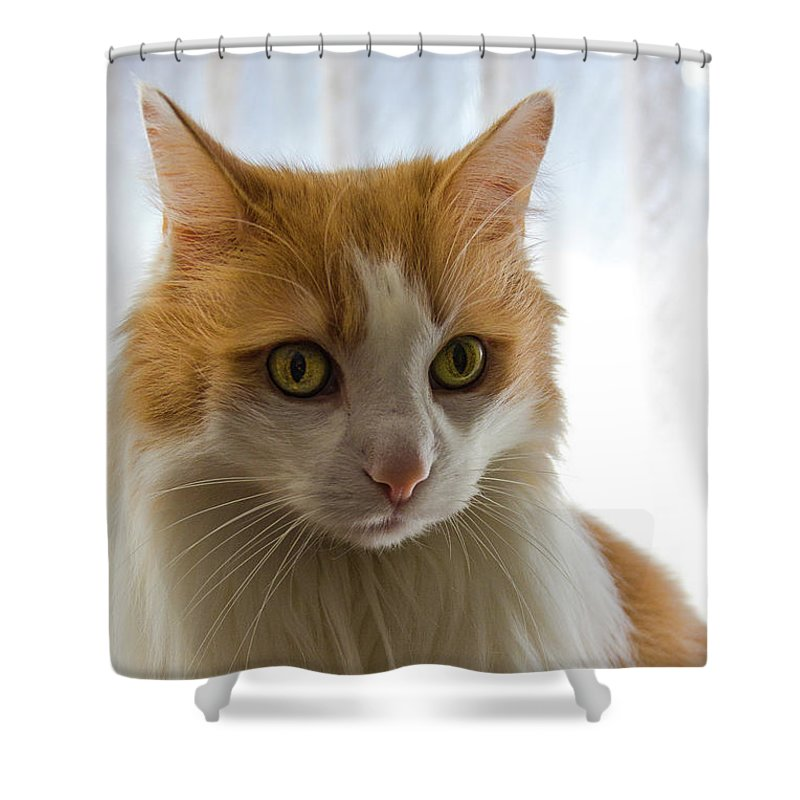 Animal Shower Curtain featuring the photograph The Boss by Peteris Vaivars