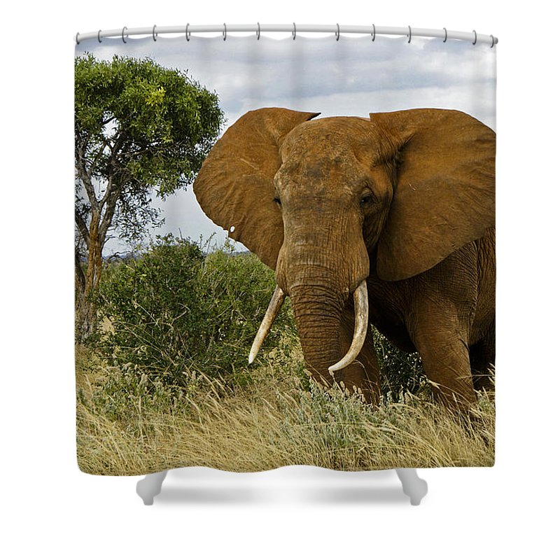 Africa Shower Curtain featuring the photograph The Old Bull by Michele Burgess