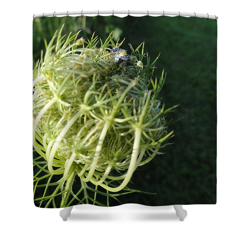 Shower Curtain featuring the photograph The Queen Is Home by Trish Hale