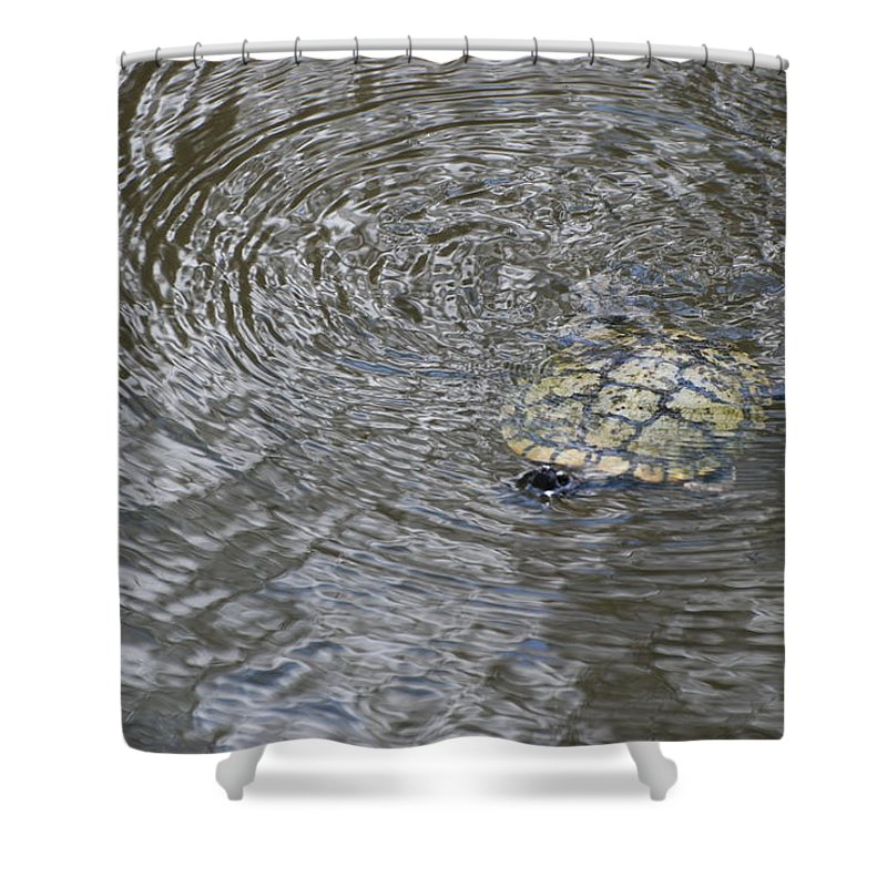 Water Shower Curtain featuring the photograph The Swimming Turtle by Rob Hans