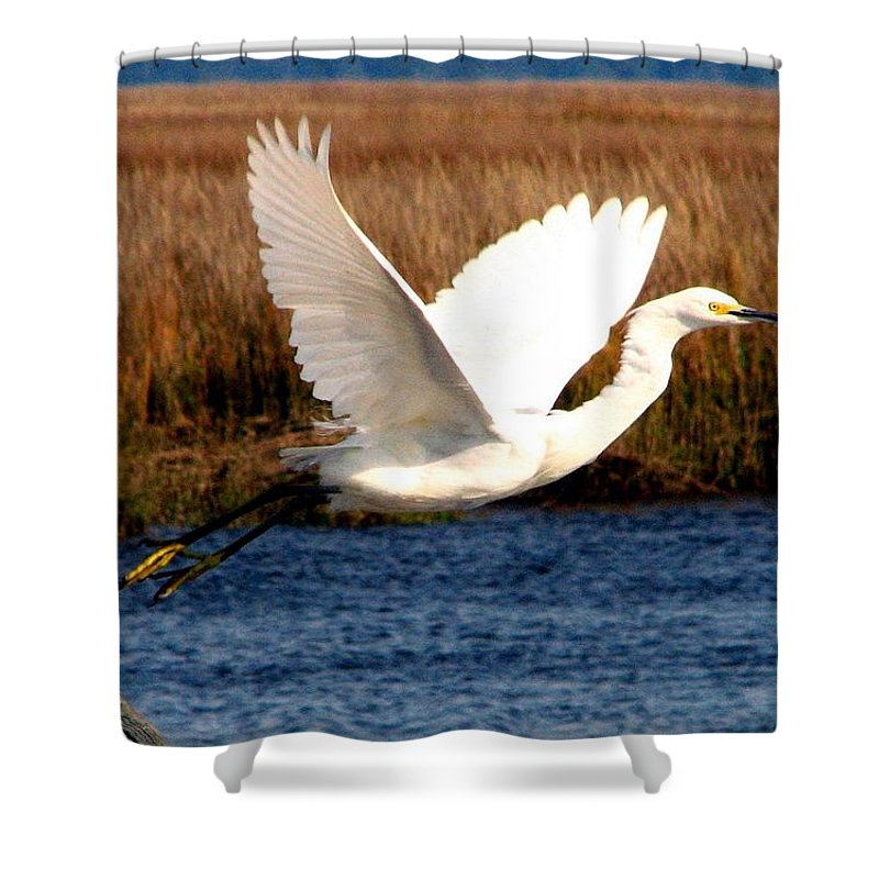 Egret Shower Curtain featuring the photograph The Takeoff by J M Farris Photography