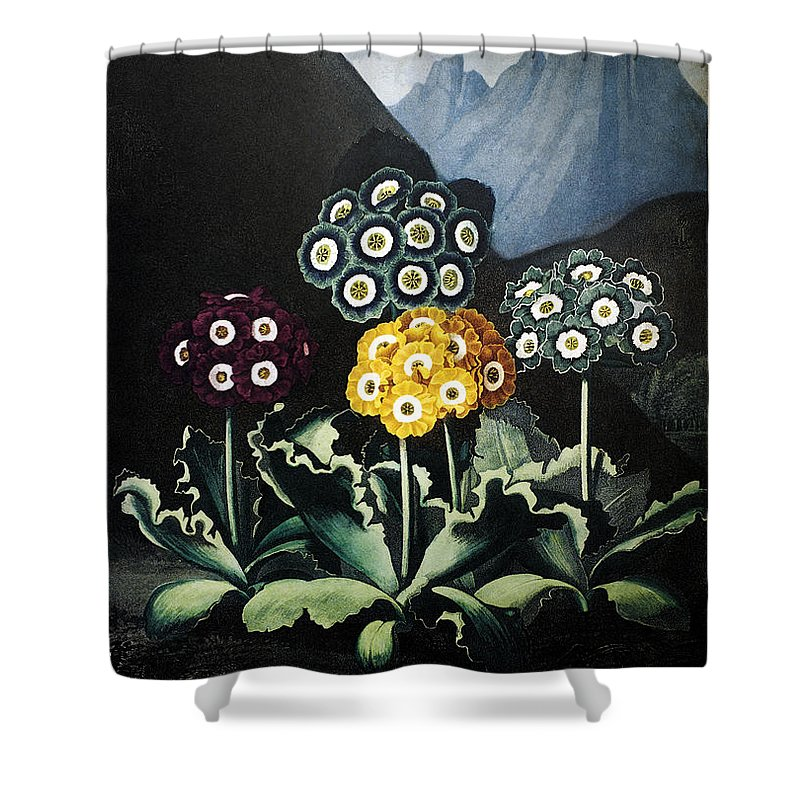 1807 Shower Curtain featuring the photograph Thornton: Auriculas by Granger