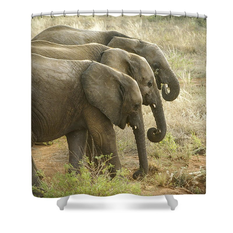 Africa Shower Curtain featuring the photograph Three In A Row by Michele Burgess