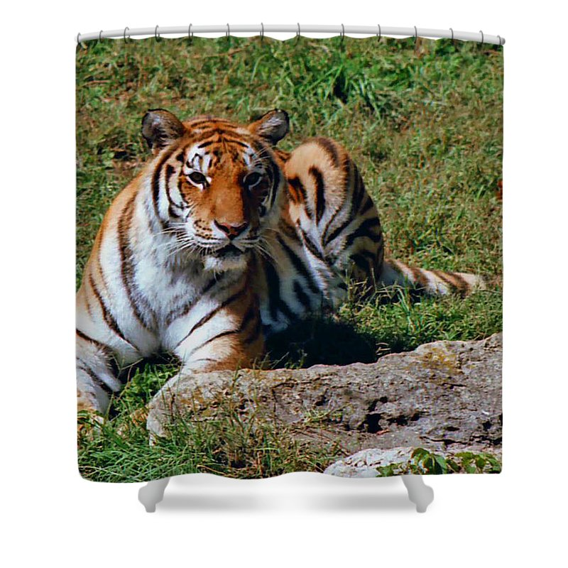 Animal Shower Curtain featuring the photograph Tiger II by Gary Adkins
