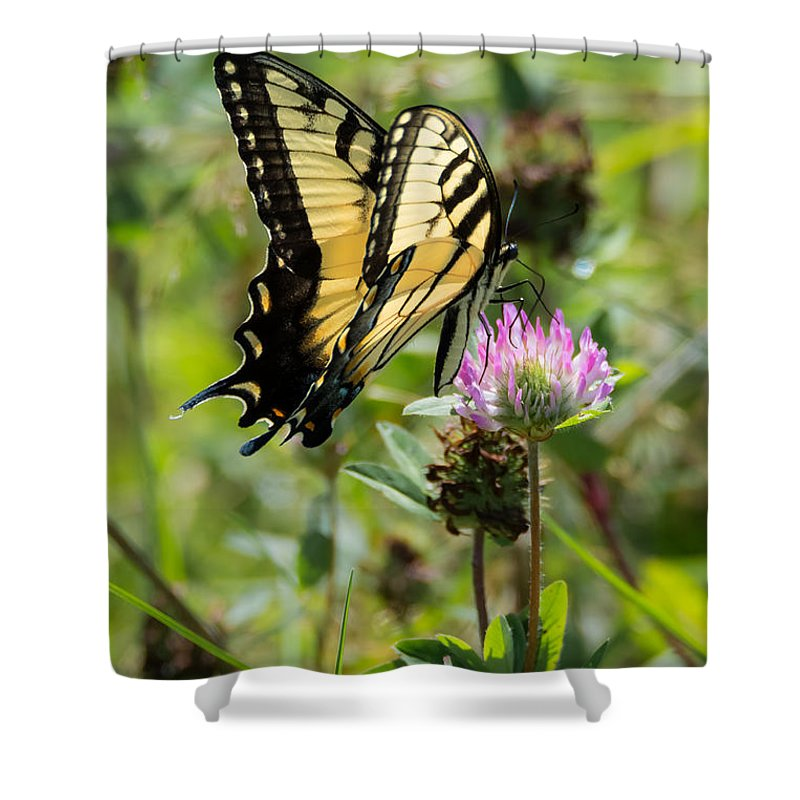 Butterfly Shower Curtain featuring the photograph Tiger Swallowtail Butterfly by Jan M Holden