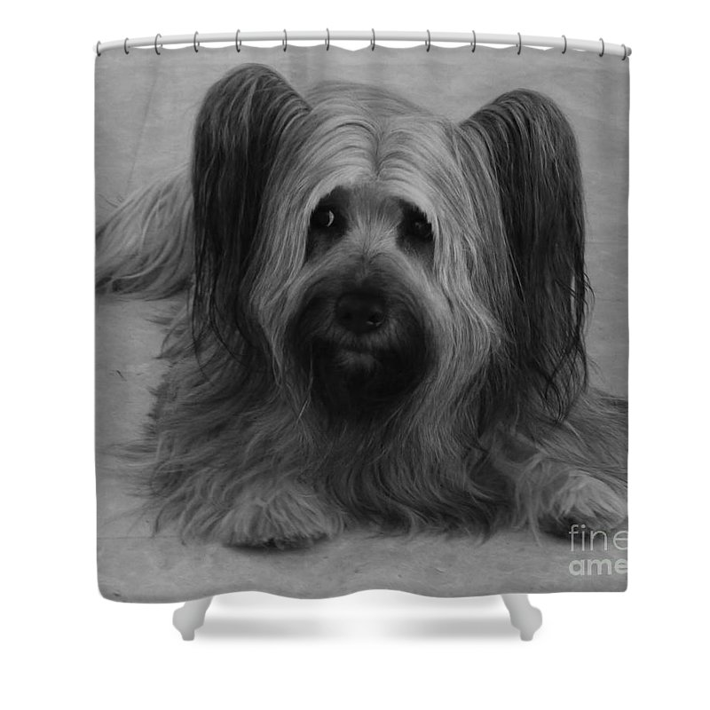 Dog Shower Curtain featuring the photograph Tory by Heather Hennick
