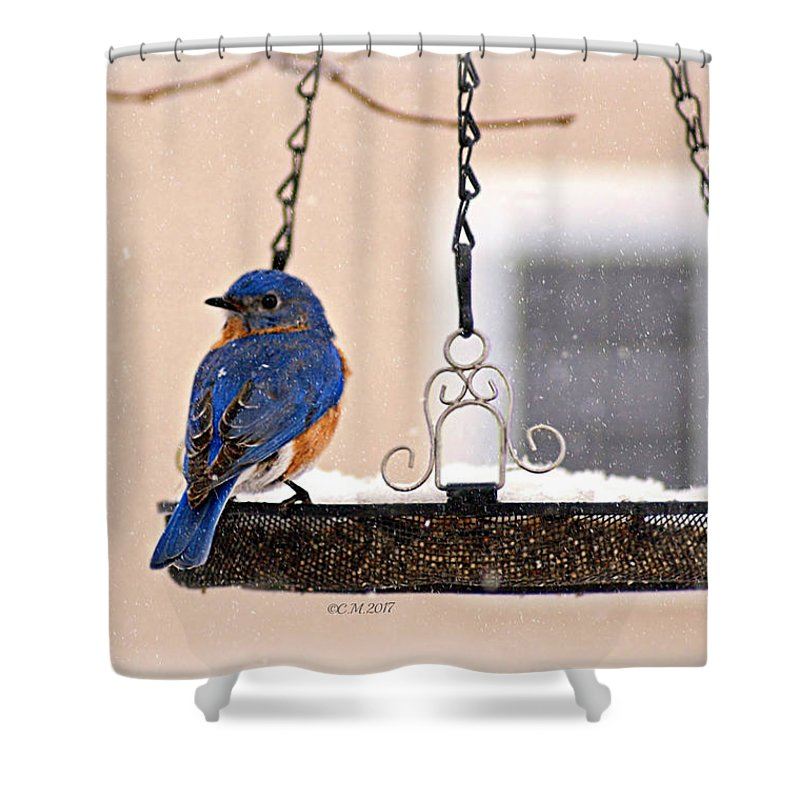 Bluebird Shower Curtain featuring the photograph Transfixed by Catherine Melvin