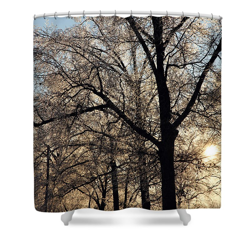 Trees Shower Curtain featuring the photograph Trees In Ice Series by Amanda Barcon