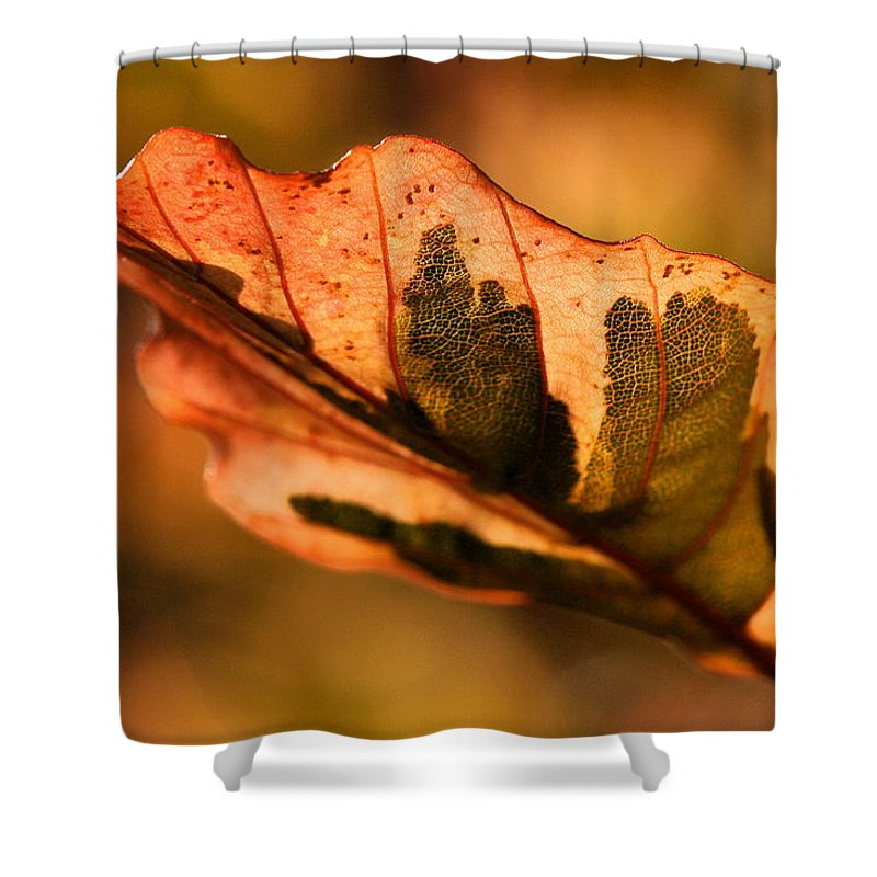 Fall Shower Curtain featuring the photograph Tri-color Beech In Autumn by Angela Rath