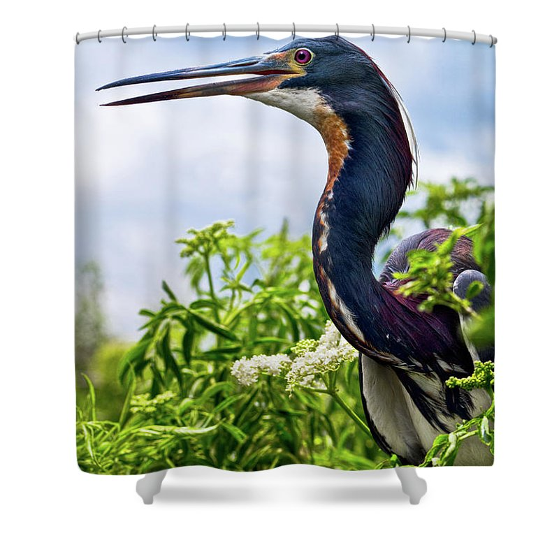 Bird Shower Curtain featuring the photograph Tri-colored Heron by Christopher Holmes