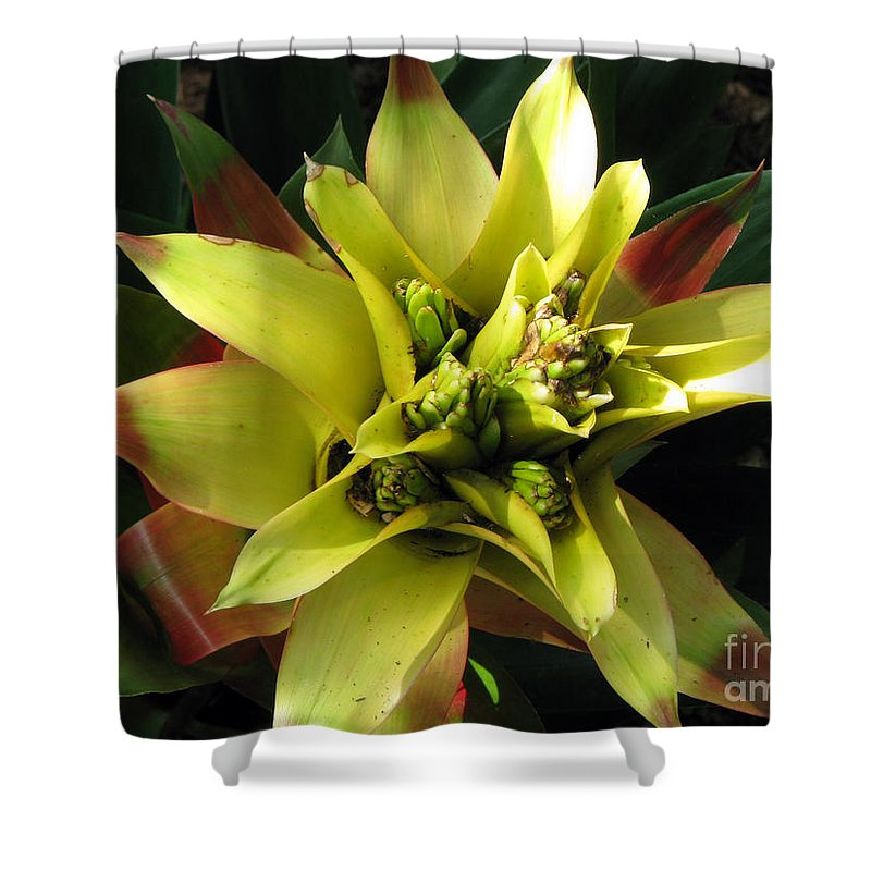 Tropical Shower Curtain featuring the photograph Tropical by Amanda Barcon