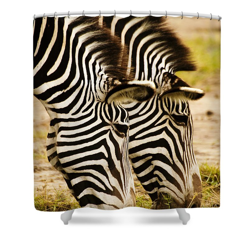 Africa Shower Curtain featuring the photograph Twins In Stripes by Michele Burgess