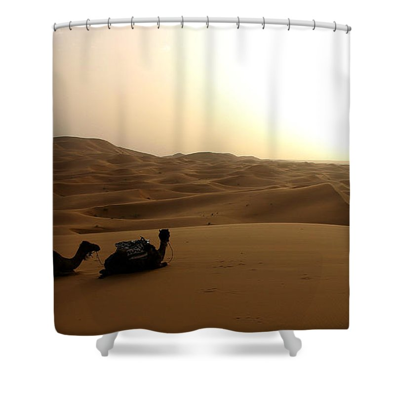 Camel Shower Curtain featuring the photograph Two Camels At Sunset In The Desert by Ralph A Ledergerber-Photography