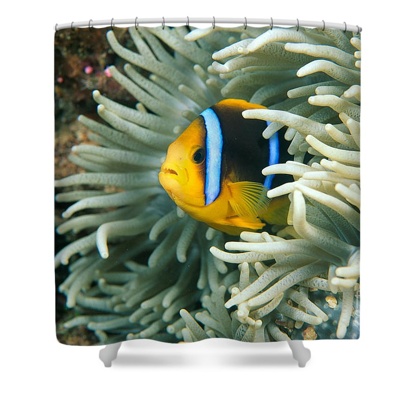 Amphiprion Shower Curtain featuring the photograph Underwater Close-up by Dave Fleetham - Printscapes