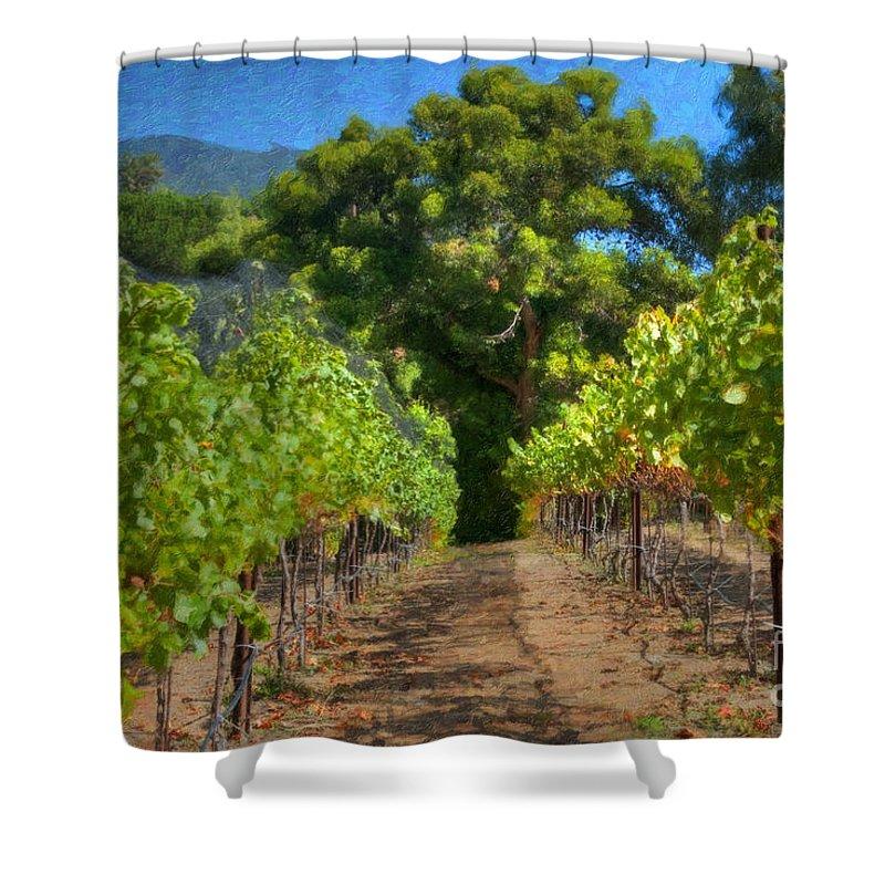 Vineyard Shower Curtain featuring the photograph Vineyard Sauvignon Blanc Grapes by David Zanzinger