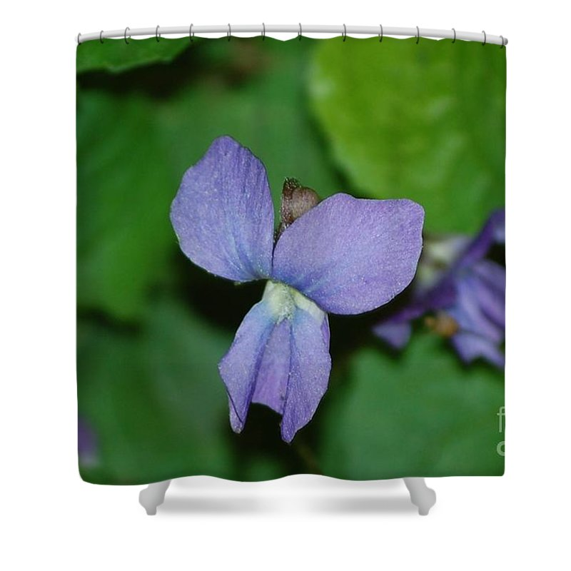 Landscape Shower Curtain featuring the photograph Violet by David Lane