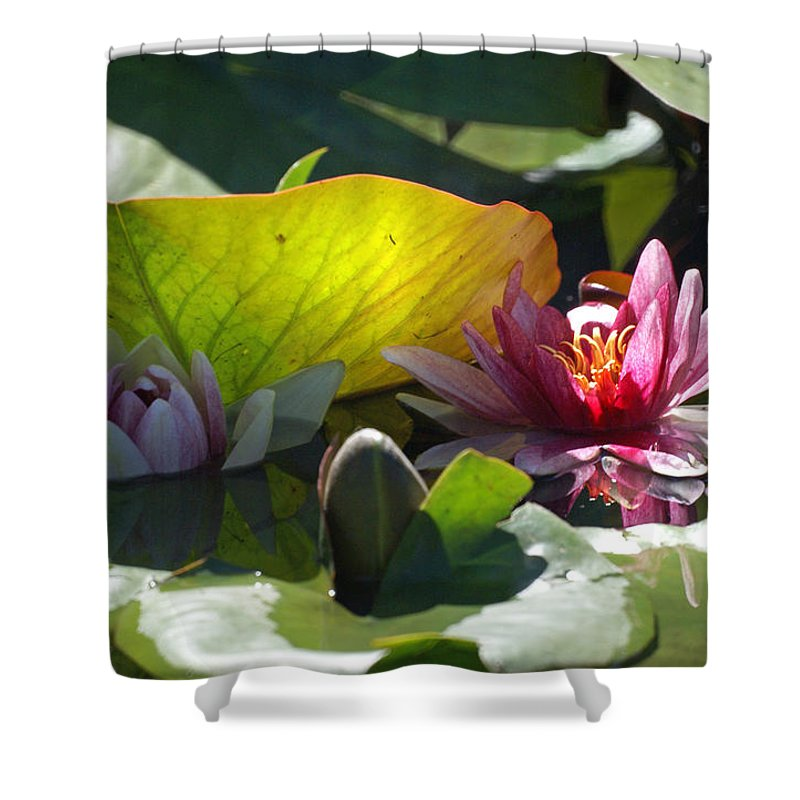 Water Lily Shower Curtain featuring the photograph Water Lily by Heather Coen