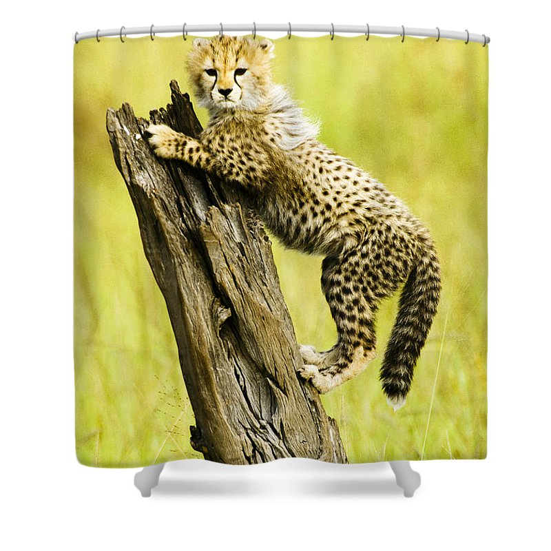 Africa Shower Curtain featuring the photograph What A Cutie by Michele Burgess