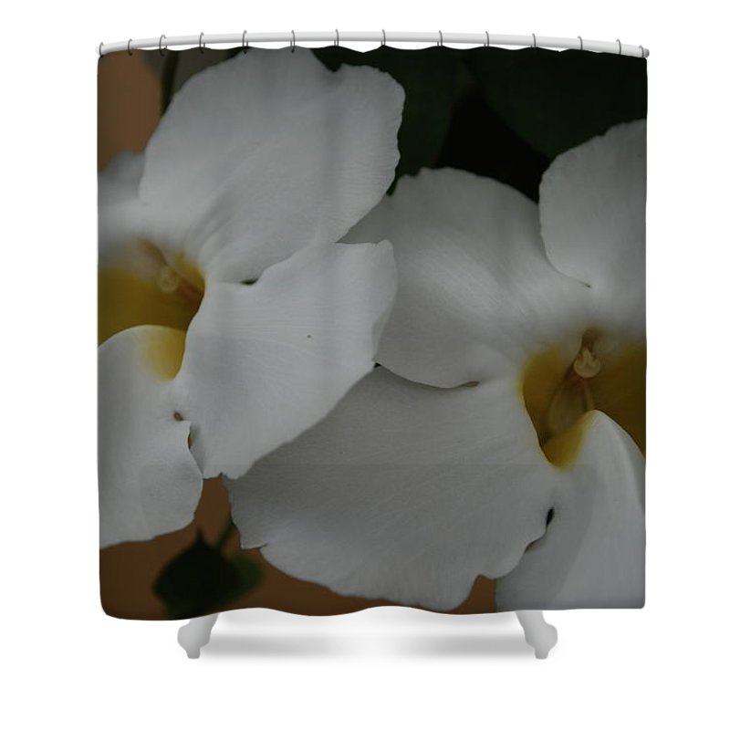 Macro Shower Curtain featuring the photograph White Orchids by Rob Hans