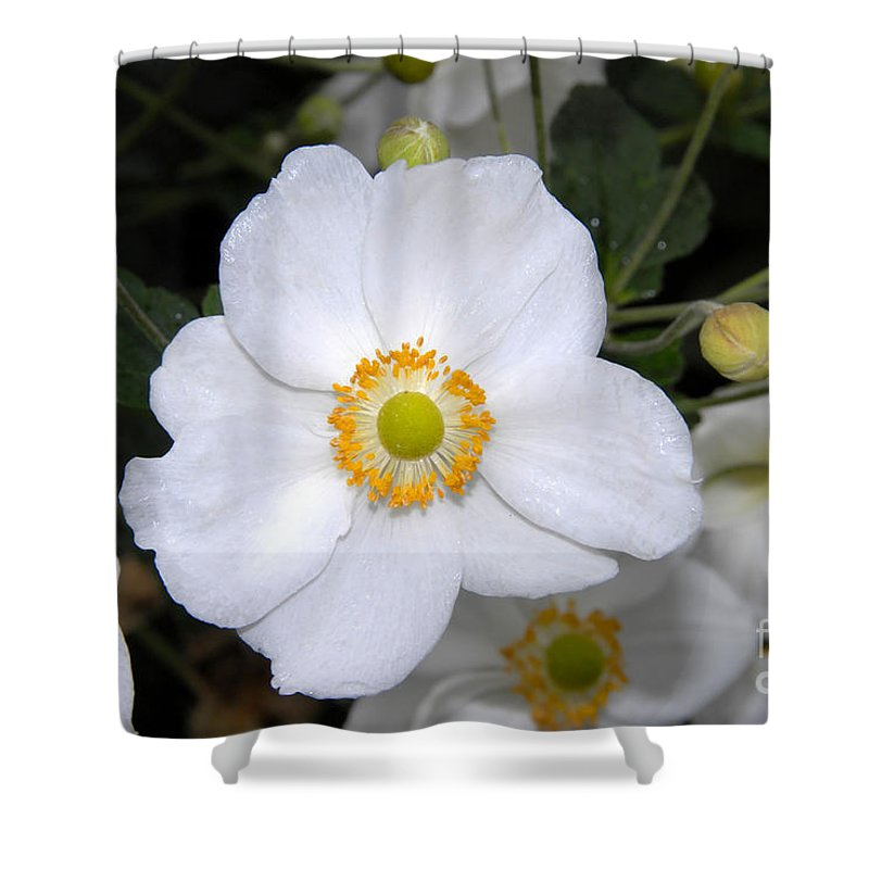 White Shower Curtain featuring the photograph White Wonder by David Lee Thompson