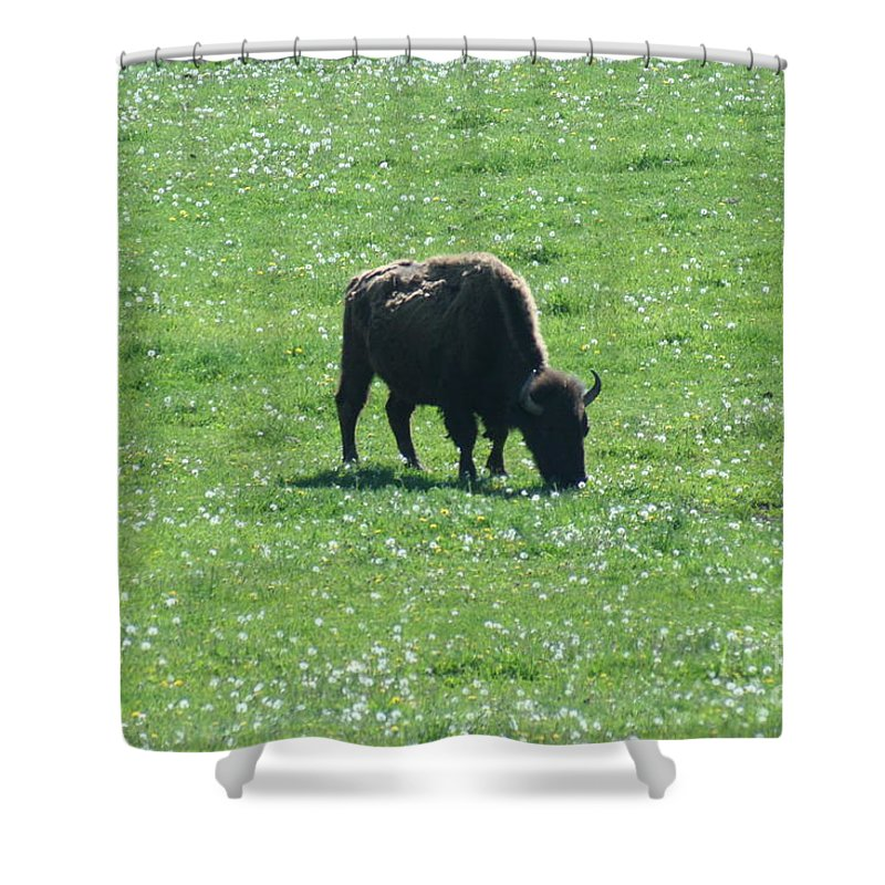 Wisconsin Shower Curtain featuring the photograph Wisconsin Buffalo by Tommy Anderson