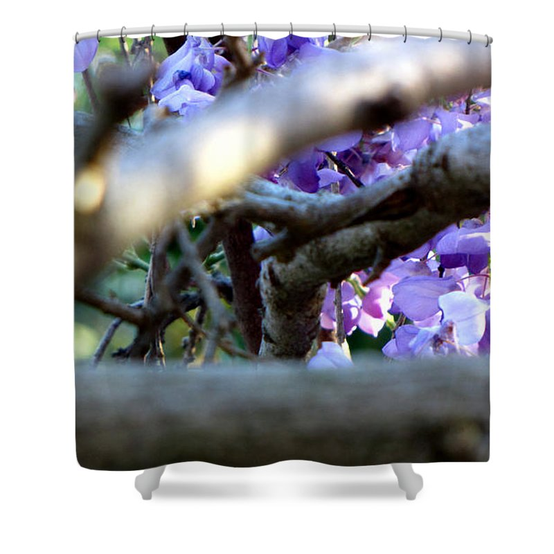 Flowers Shower Curtain featuring the photograph Wisteria by Sarah Houser