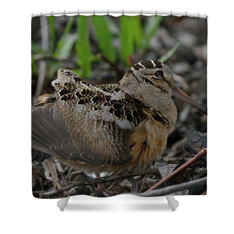 North American Shower Curtain featuring the photograph Woodcock In The Woods by Mark Wallner