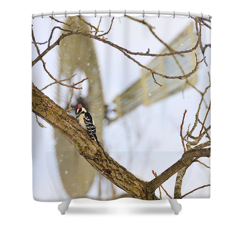 Windmill Shower Curtain featuring the photograph Woodpecker And Windmill by David Arment