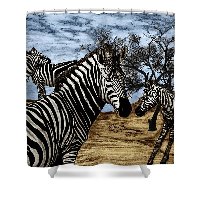 Zebra Outback Shower Curtain featuring the drawing Zebra Outback by Peter Piatt