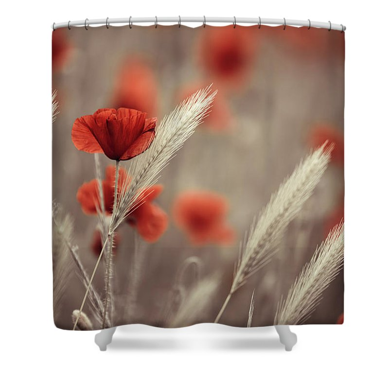 Poppy Shower Curtain featuring the photograph Summer Poppy Meadow by Nailia Schwarz