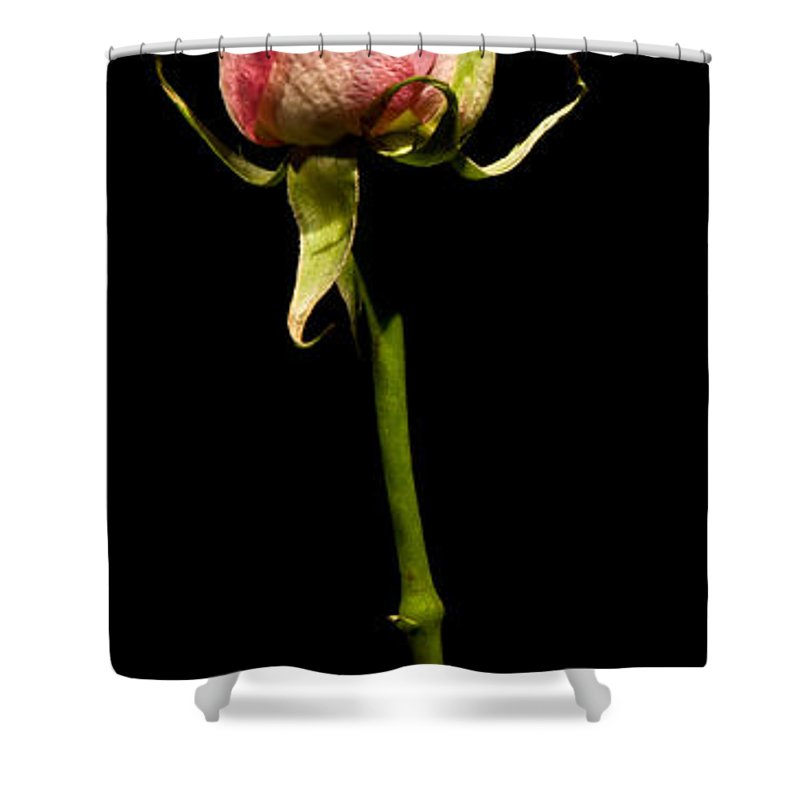 Scent Shower Curtain featuring the photograph Single Rose by Avril Christophe