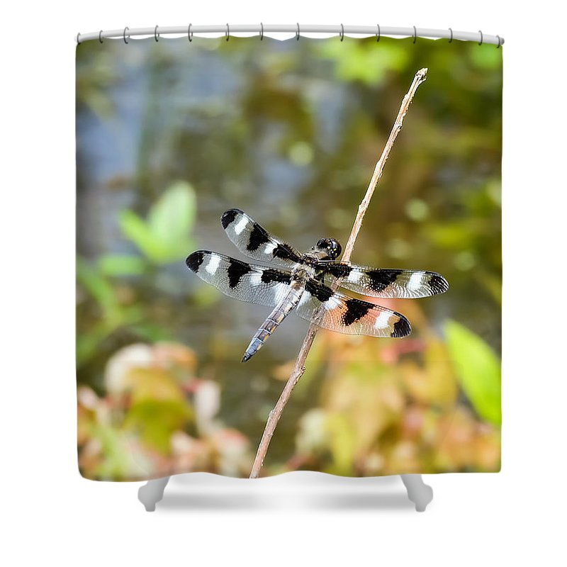 12 Spotted Skimmer Dragonfly 2 Shower Curtain featuring the photograph 12 Spotted Skimmer Dragonfly 2 by Cynthia Woods