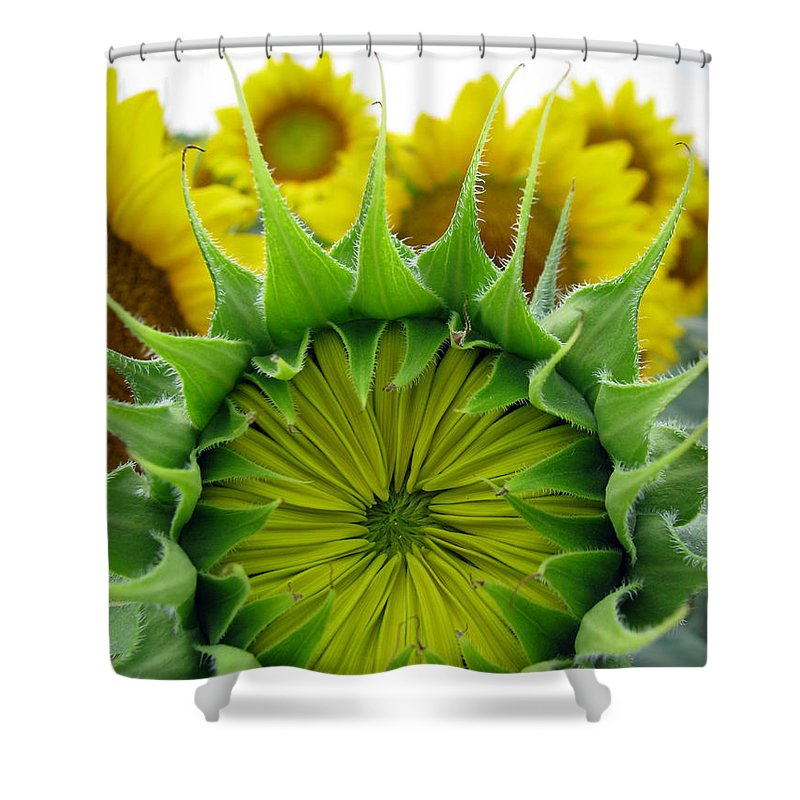 Sunflwoers Shower Curtain featuring the photograph Sunflower Series by Amanda Barcon