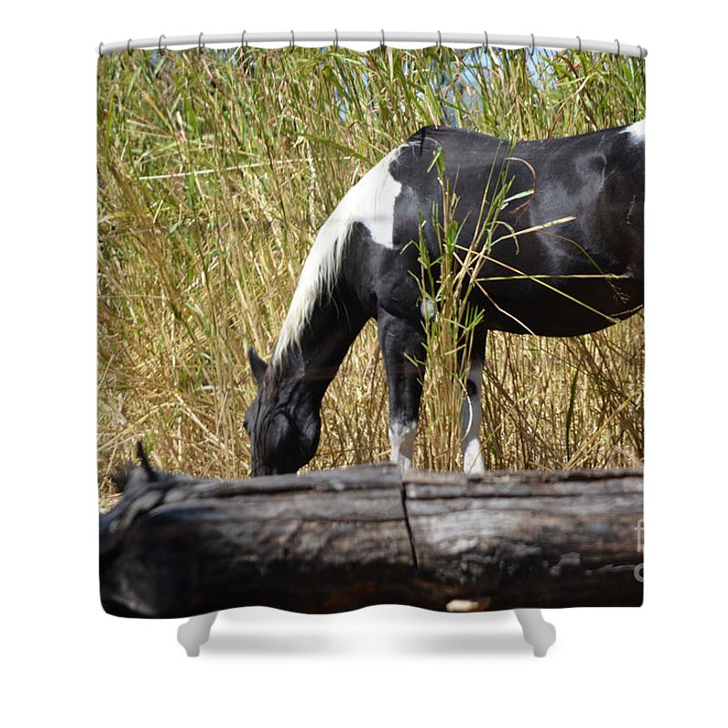 Lunch Time Prints Shower Curtain featuring the photograph Lunch Time by Ruth Housley