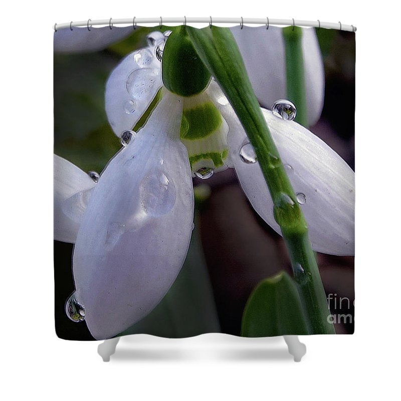 Flowers Shower Curtain featuring the photograph White Flowers by Elvira Ladocki