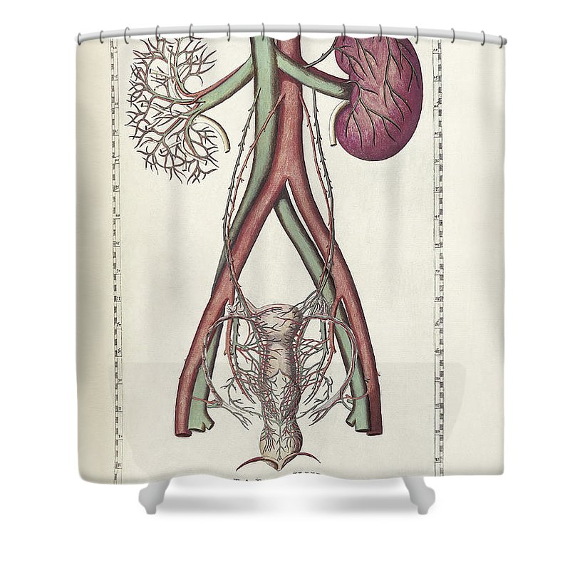 Vertical Shower Curtain Featuring The Digital Art Science Of Human Anatomy By National Library
