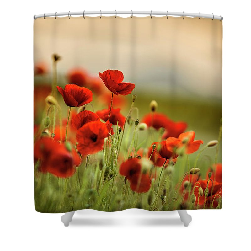 Poppy Shower Curtain featuring the photograph Summer Poppy Meadow 18 by Nailia Schwarz