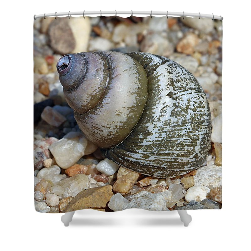 Shell Shower Curtain featuring the photograph 169 by Bryrrose Photography