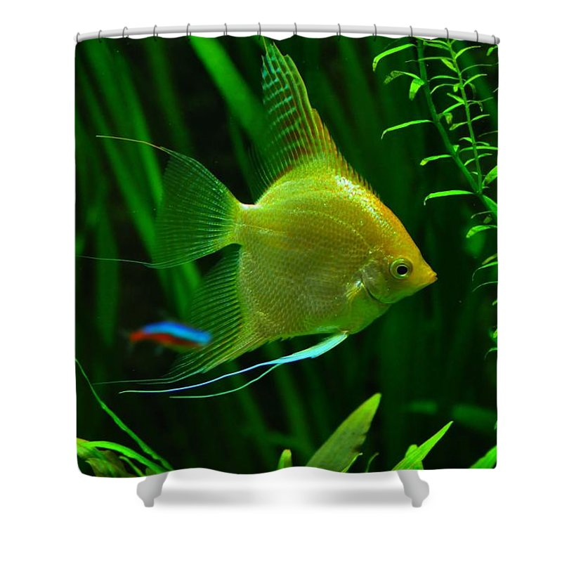 Fish Shower Curtain featuring the photograph Fish by FL collection
