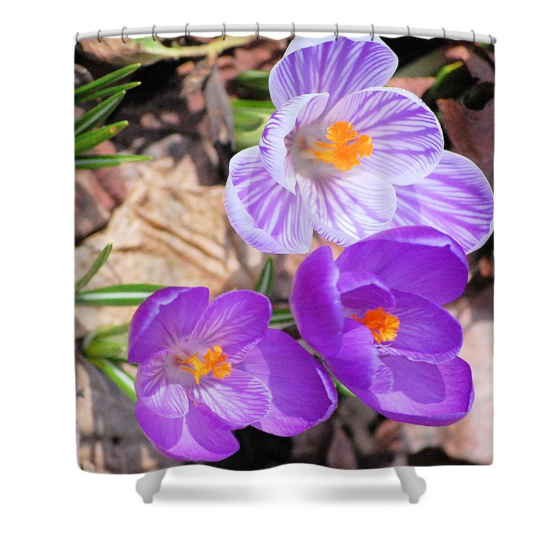 Digital Photography Shower Curtain featuring the photograph 1st Flower In Garden 2010 Photo by David Lane
