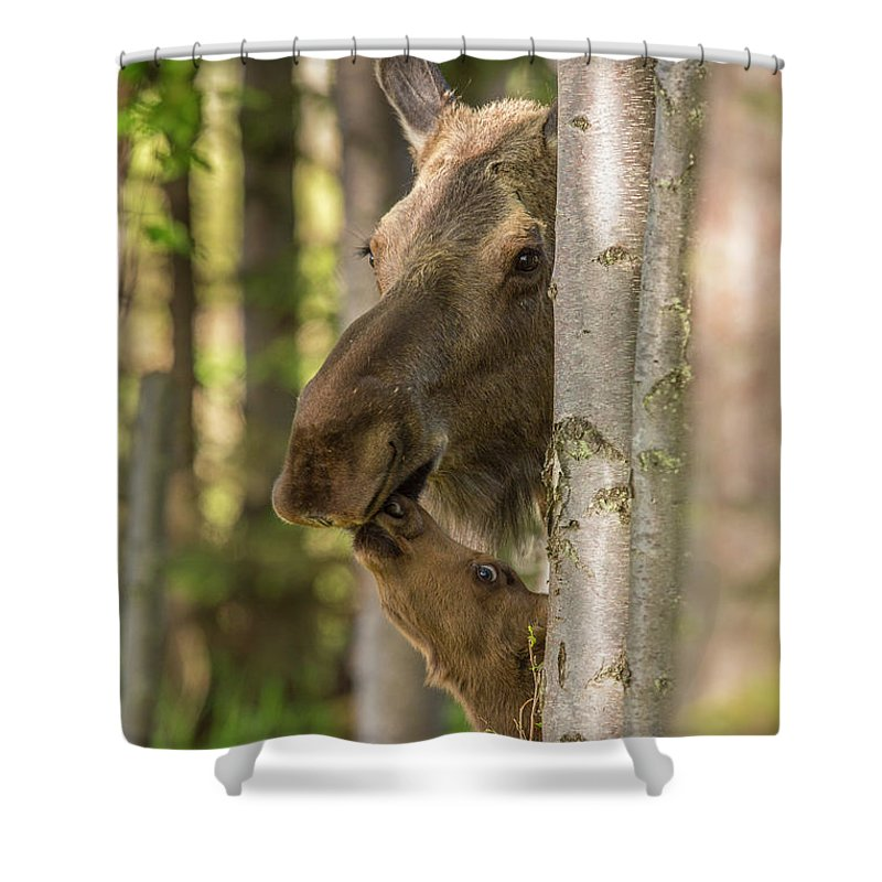 Adult Shower Curtain featuring the photograph A Kiss For Mom by Tim Grams