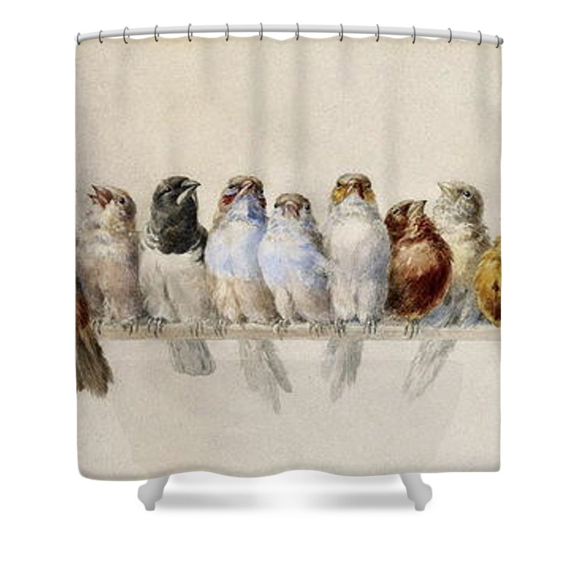 Pheasant Shower Curtain Featuring The Painting A Perch Of Birds By Hector Giacomelli