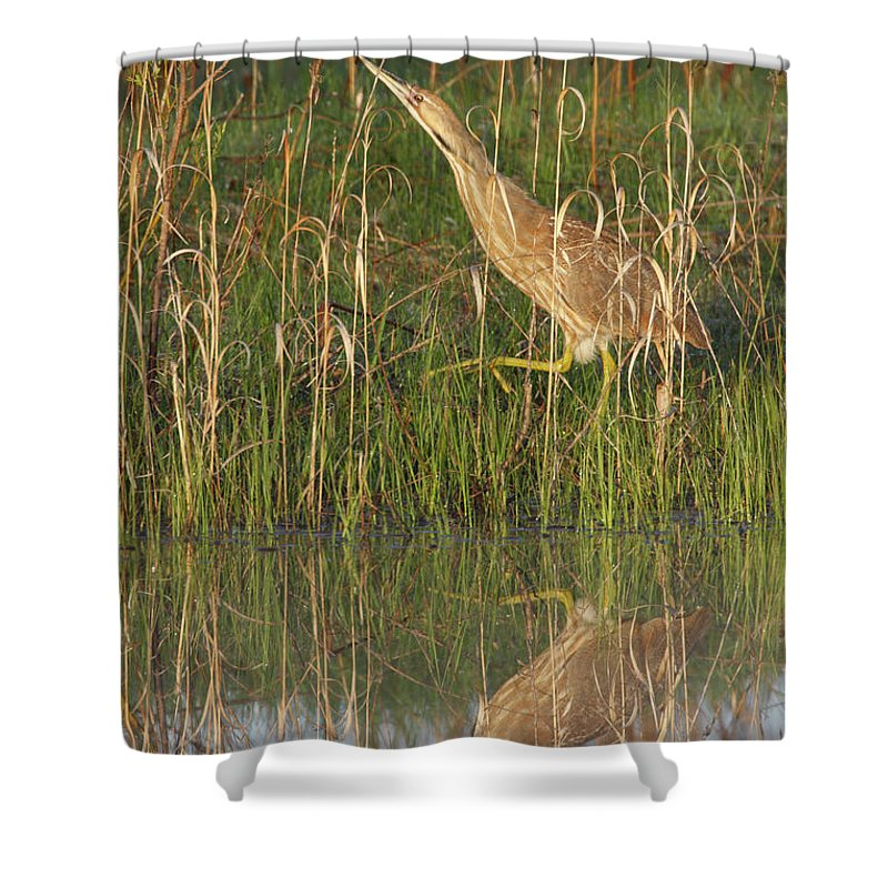 Reflection Shower Curtain featuring the photograph American Bittern Along The Shore by Mark Wallner