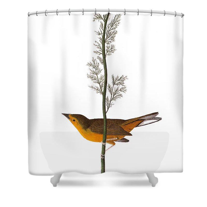 1827 Shower Curtain featuring the photograph Audubon: Warbler, (1827) by Granger