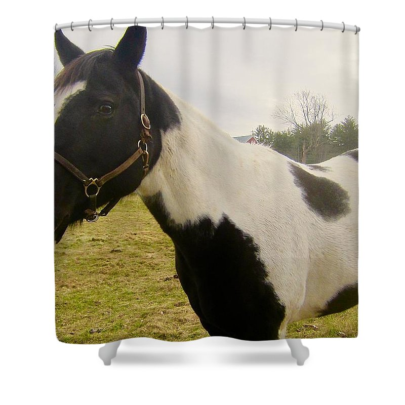Horse Shower Curtain featuring the photograph Babe by Elizabeth Tillar