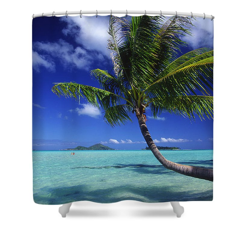 Beach Shower Curtain featuring the photograph Bora Bora, Palm Tree by Ron Dahlquist - Printscapes