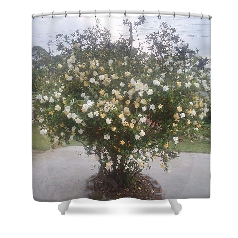 Tatar Assam Flower Shower Curtain featuring the photograph Bordoloi by Jayanta