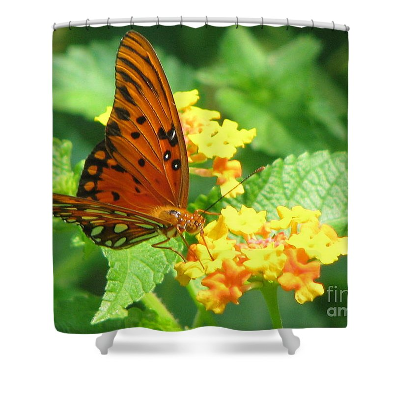 Butterfly Shower Curtain featuring the photograph Butterfly by Amanda Barcon
