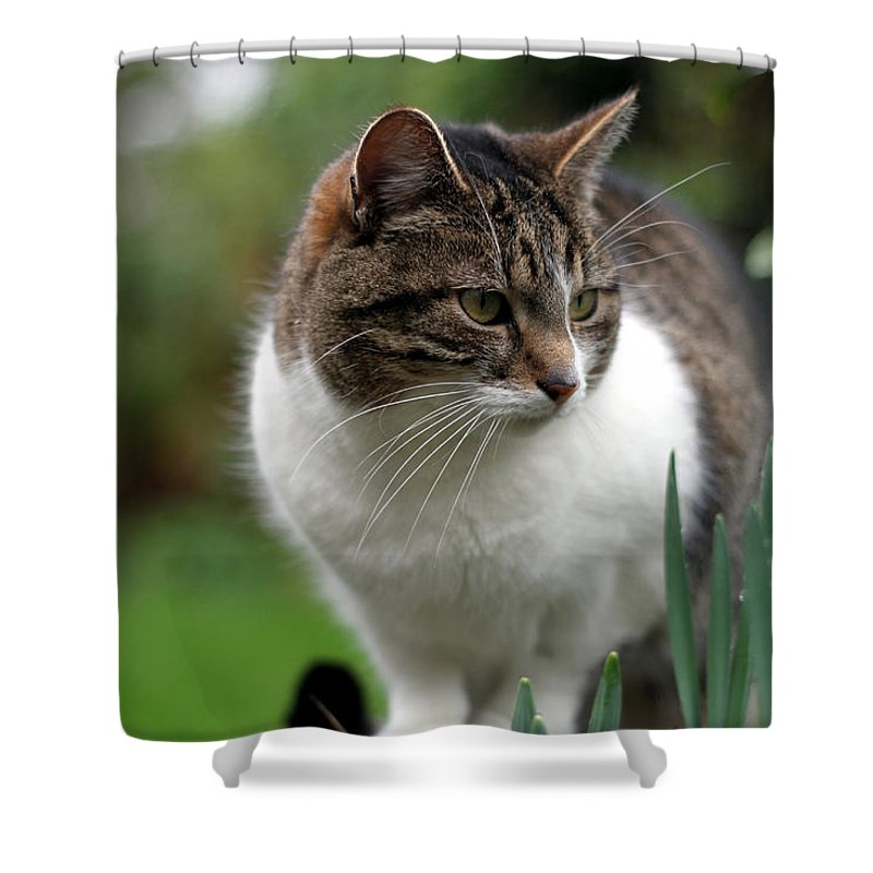 Cat Shower Curtain featuring the digital art Cat by Zia Low